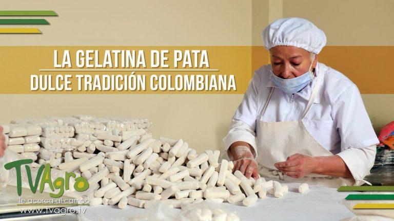 La Gelatina de Pata: Dulce Tradición Colombiana – TvAgro por Juan Gonzalo Angel